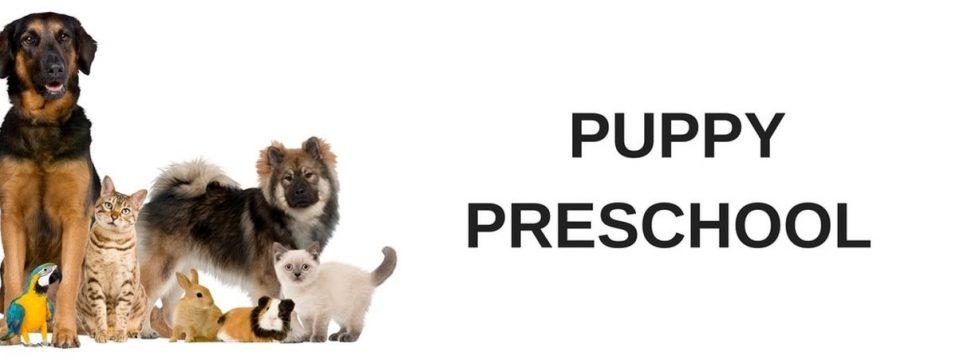 puppy preschool training