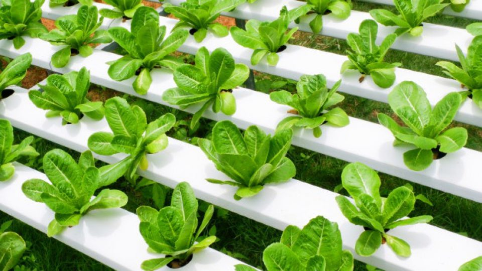 hydroponic apps for laptop